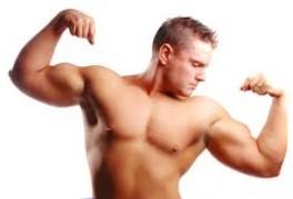 muskler_1